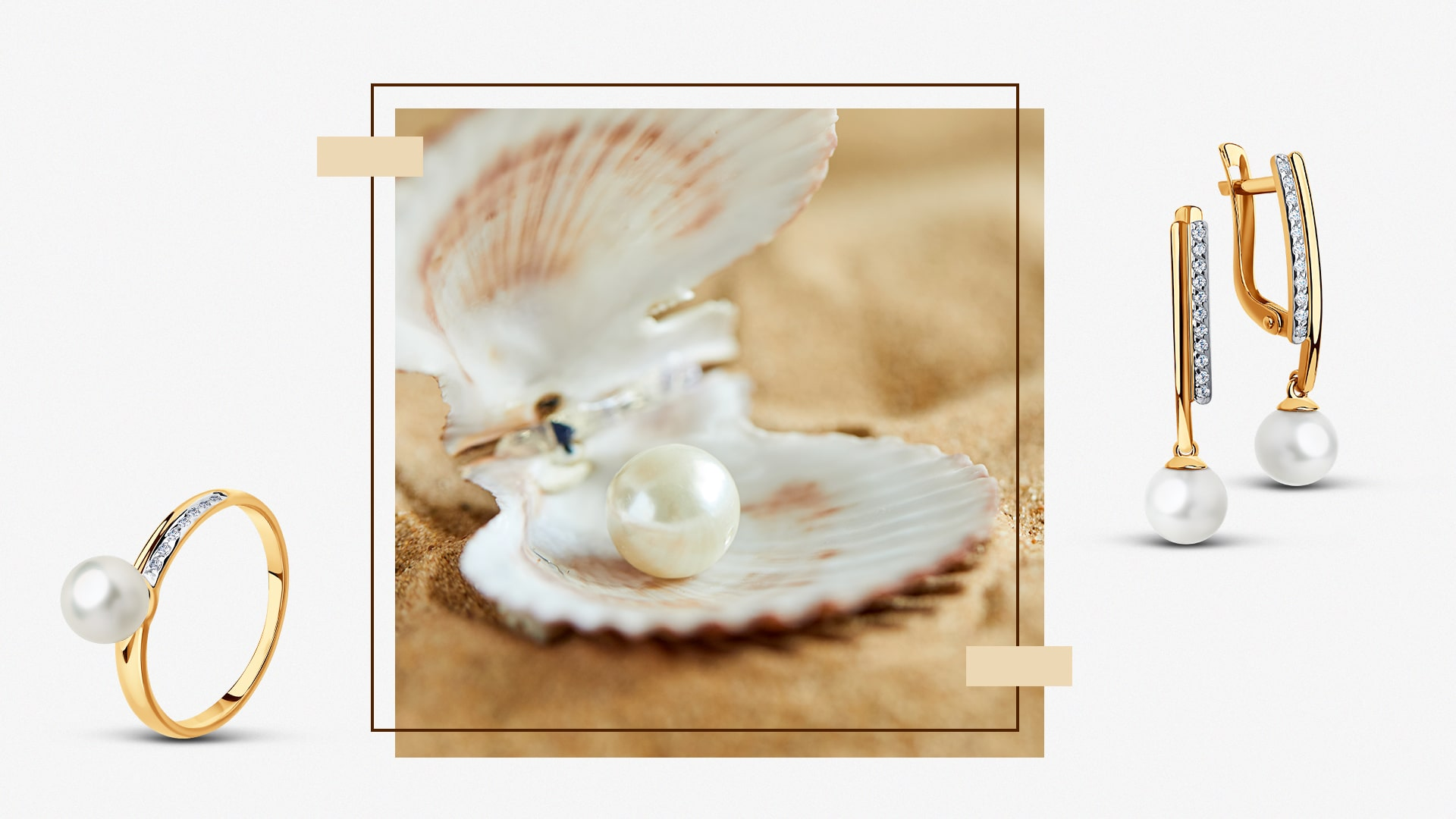 Раковина моллюска